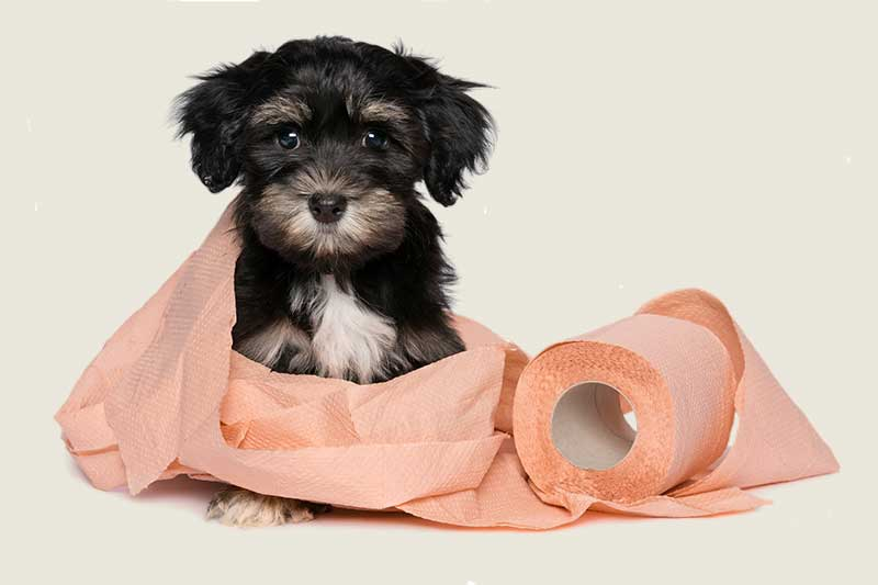 Dog Waste Service