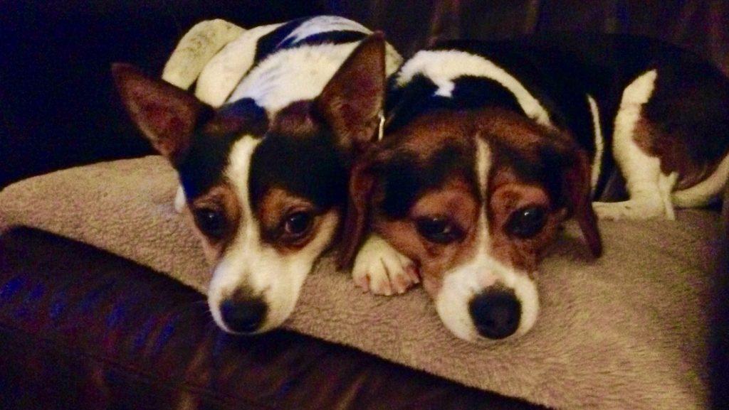 Millie & Maisie