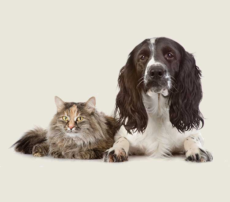Pet Sitting (Dog Sitters & Cat Sitters in Ayr)