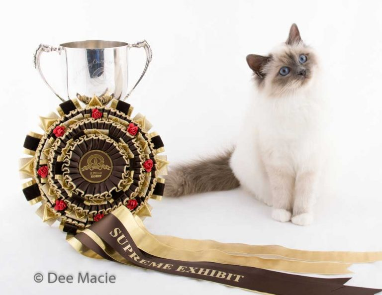 Birman Cat Award