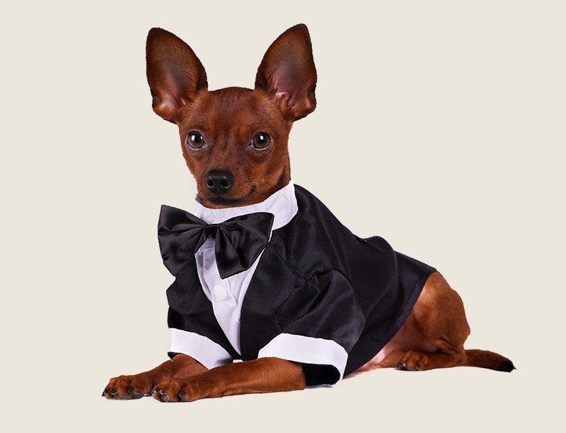 Pets At Weddings - Woof Woof Walkies