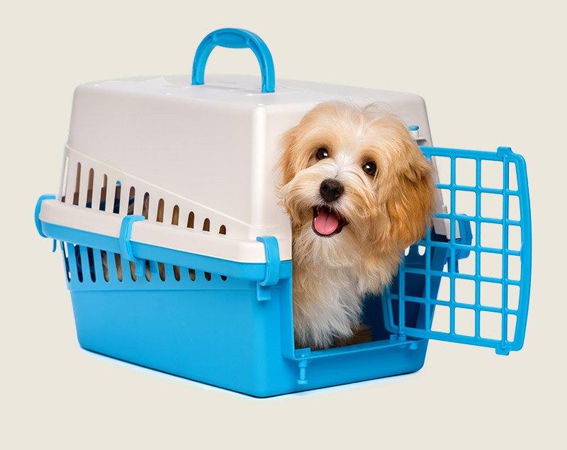 Pet Transport Ayr - Woof Woof Walkies